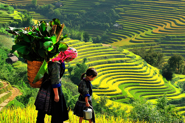 HOTDEAL: 3NIGHTS - 2 DAYS SAPA HILL TRIBES TREK AND 1 NIGHT AT HOTEL